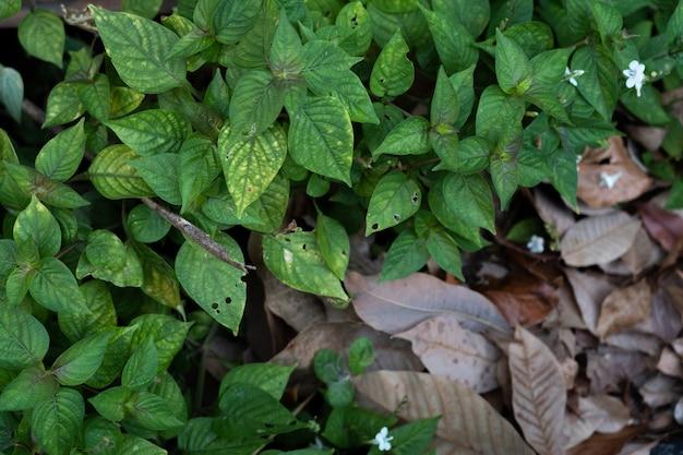 Plomb sec et feuille verte
