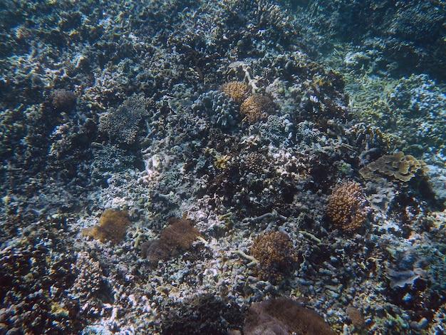 Plongée en apnée, l'île de bali, indonésie