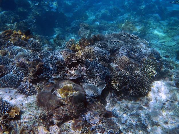 Plongée en apnée sous l'eau sur l'île de bali, indonésie