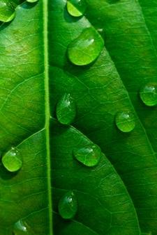 La pluie tombe sur les feuilles.