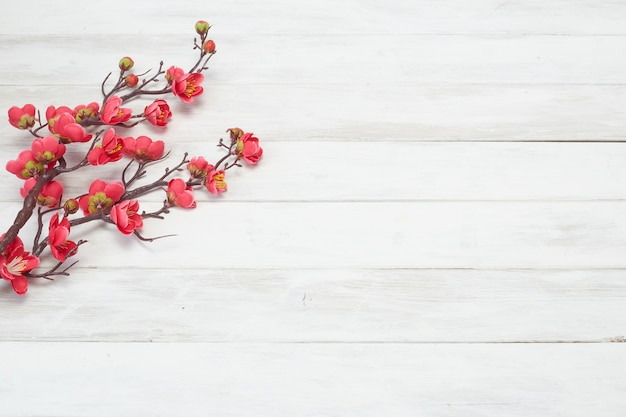 Plum flowers blossom sur planche de bois blanc