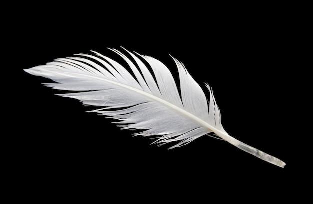 Plume d'aile d'oiseau blanc isolé sur fond noir