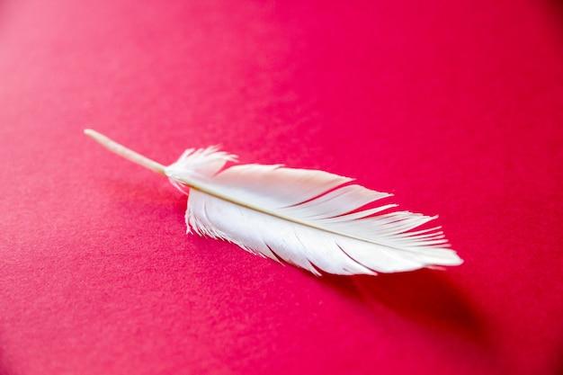 Plume d'aile d'oiseau blanc isolé sur fond rouge
