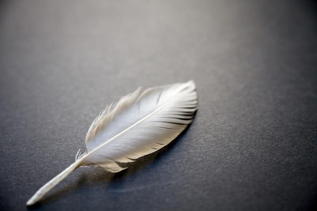 Plume d'aile d'oiseau blanc reposant sur un fond sombre et élégant