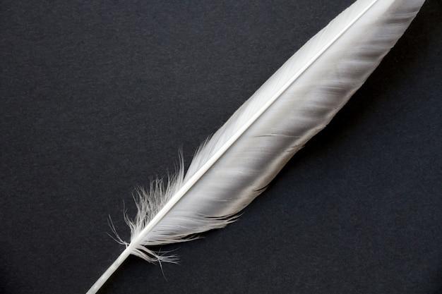 Plume d'aile d'oiseau isolé sur fond noir