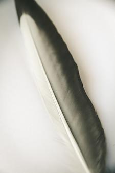 Plume d'aile d'oiseau reposant sur un fond gris