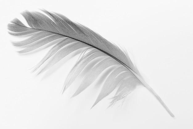 Plume blanche sur fond blanc