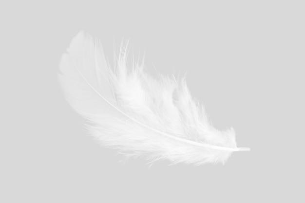 Plume blanche sur fond gris