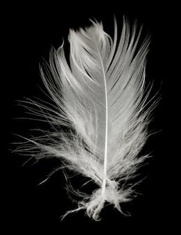 Plume blanche sur fond noir