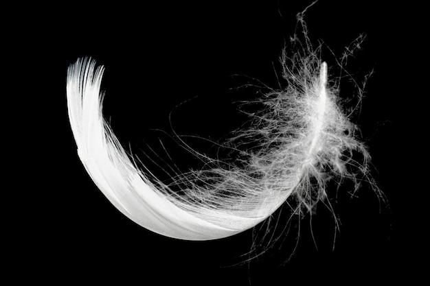 Plume blanche isolée sur fond noir