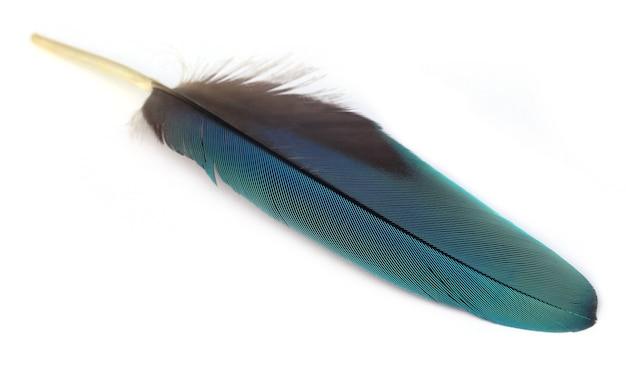 Plume colorée d'oiseau ara sur fond blanc