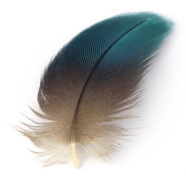 Plume d'oiseau ara