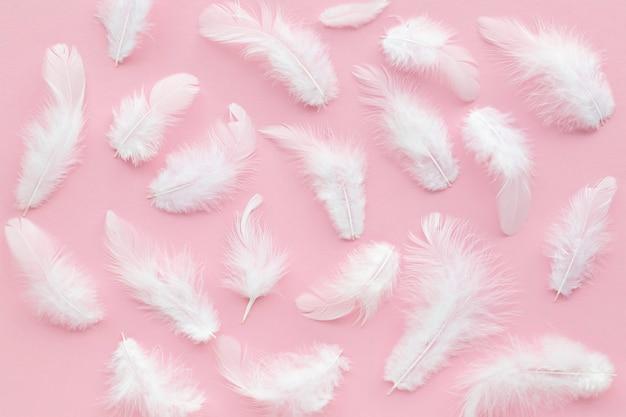Plume D'oiseau Blanc Sur Rose Photo Premium