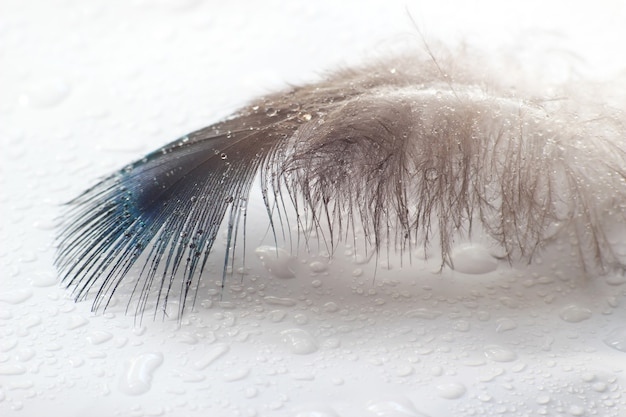 La plume d'oiseau de couleur se trouve sur une surface blanche dans les gouttelettes d'eau