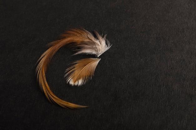 Une plume d'oiseau orange sur un fond texturé noir avec un espace propre sous votre texte