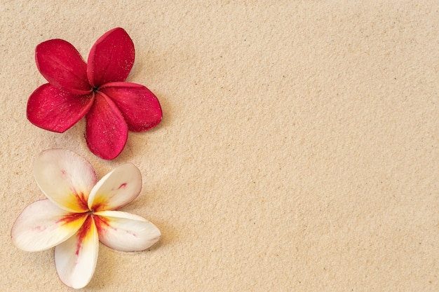 Plumeria fleur sur fond de plage de sable