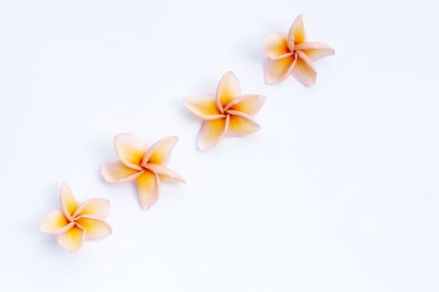 Plumeria ou fleur de frangipanier sur fond blanc. vue de dessus