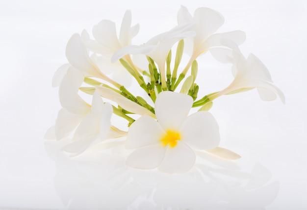 Plumeria ou frangipani spa fleurs sur blanc