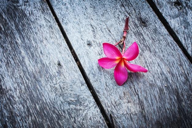 Plumeria rose sur le bois