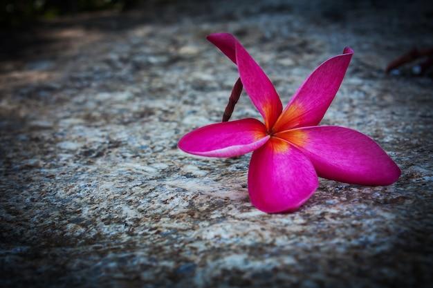Plumeria rouge sur le sol