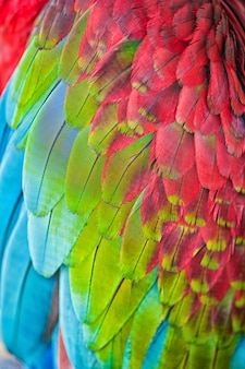 Plumes d'ara de perroquet, texture de fond coloré