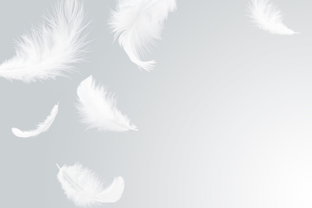 Plumes blanches tombant dans l'air.
