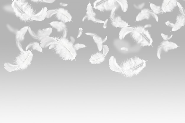 Plumes blanches tombant dans les airs.