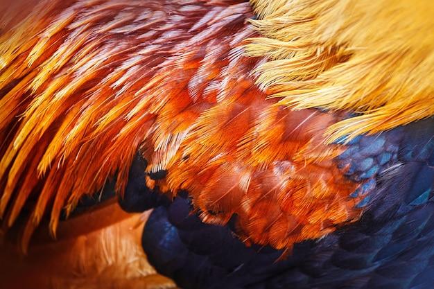 Plumes colorées lumineuses d'un certain oiseau