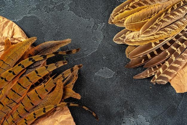 Plumes de faisan sur fond texturé sombre, espace copie