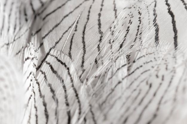 Plumes de gros plan avec des lignes noires
