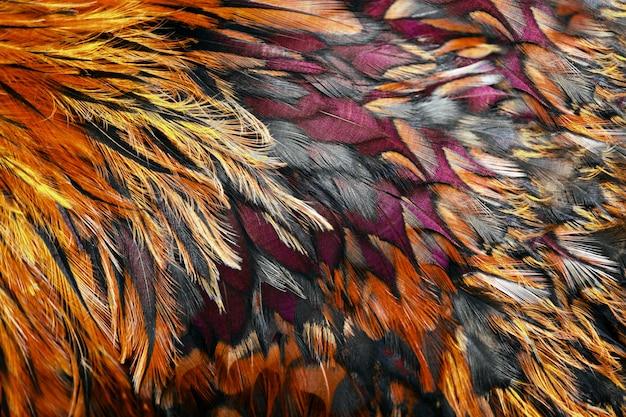 Plumes marron vif du coq se bouchent.