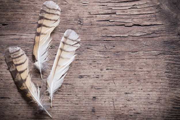 Plumes d'un oiseau sur une table en bois