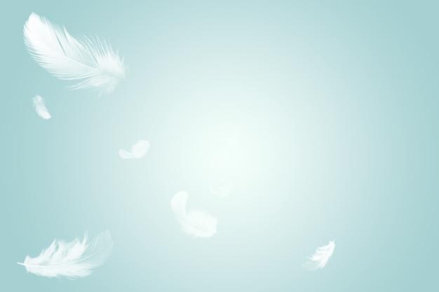 Plumes d'oiseaux blancs abstraits flottant dans l'air.