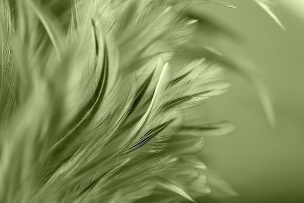 Plumes d'oiseaux et de poulet colorés dans le style doux et flou pour le fond