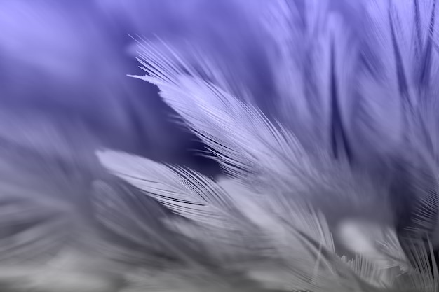 Plumes d'oiseaux et de poulet dans le style doux et flou pour le fond