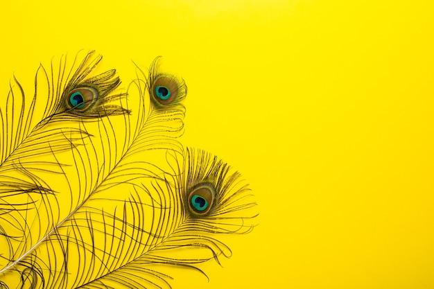 Plumes de paon irisées bleu vert or avec un judas sur un jaune vif.