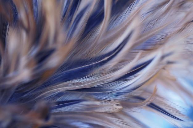 Plumes de poulet dans le style doux et flou pour le fond, art abstrait