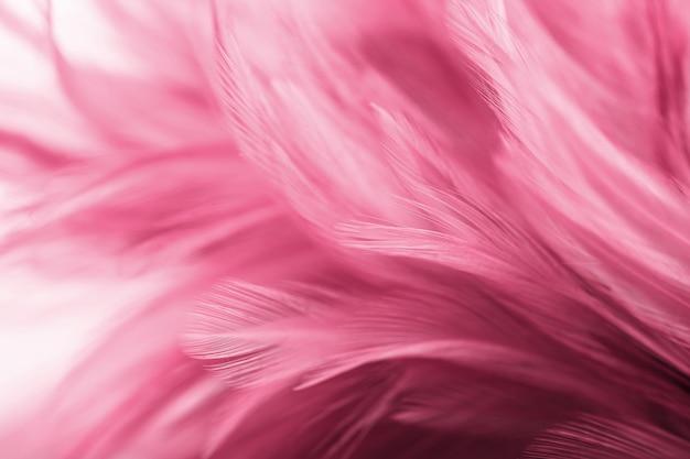 Plumes de poulet roses dans le style doux et flou pour le fond