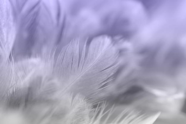 Plumes de poulet vintage en arrière-plan de style doux et flou