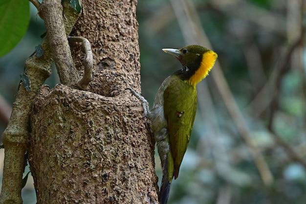 Plus grand jaune assis sur une bûche d'arbre