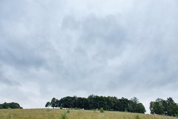 Plusieurs arbres sur une colline, copiez l'espace.