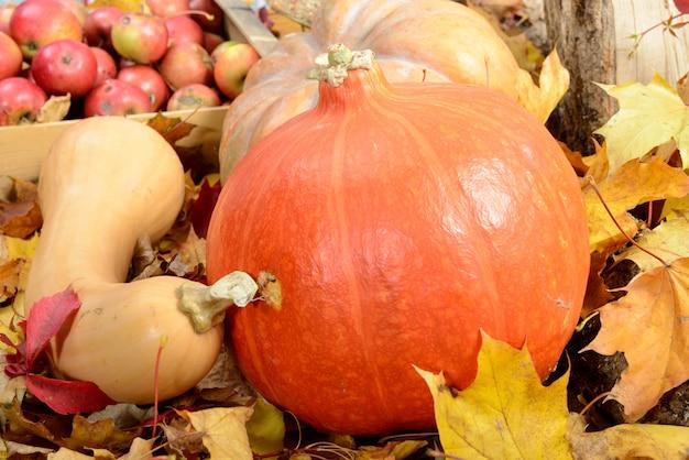 Plusieurs pommes et trois citrouilles sur des feuilles d'automne