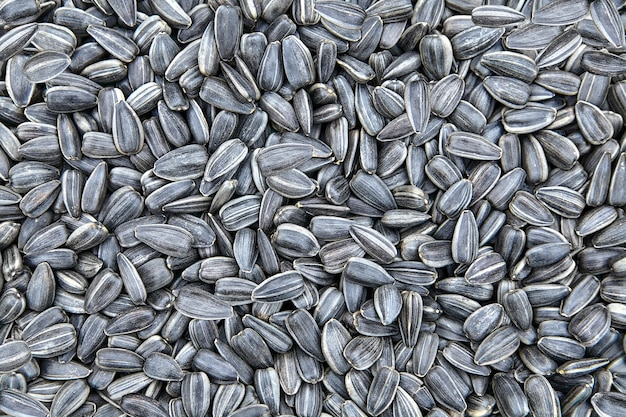 Poignée de graines de tournesol frites, concept de surpopulation ou d'explosion démographique.