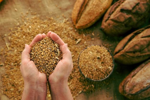 Poignée de grains de blé avec du pain fait maison sur fond