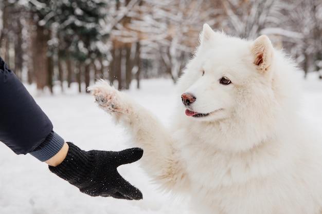 Poignée de main avec chien blanc. propriétaire avec chien de race dans la forêt