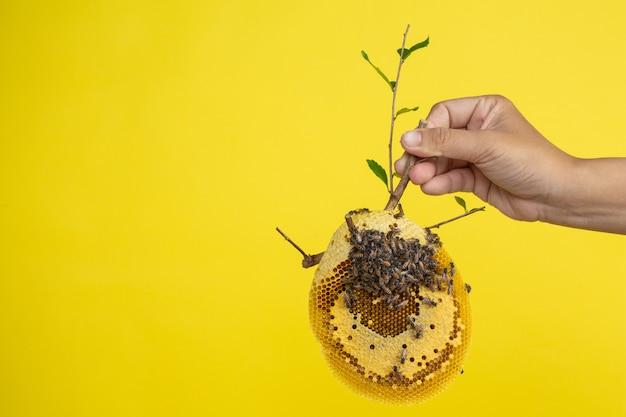 Poignée en nid d'abeille sur fond jaune en studio.
