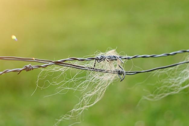 Poils d'animaux dans la clôture de barbelés à la ferme dans la nature