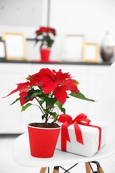 Poinsettia de fleurs de noël et décorations sur échelle décorative avec décorations de noël, sur surface claire