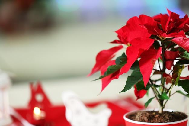 Poinsettia de fleurs de noël sur table, sur la surface des lumières