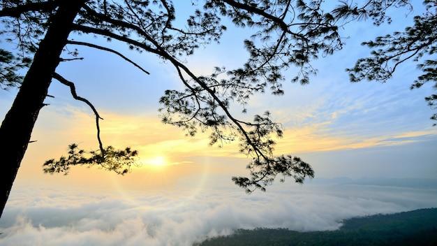 Point de vue au parc national de la thaïlande